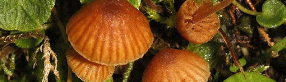 Mykologische Gesellschaft Luzern